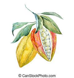 aquarela, cacao, frutas