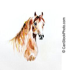 aquarela, cavalo, árabe, quadro