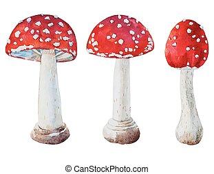 aquarela, cogumelos, vetorial, amanita