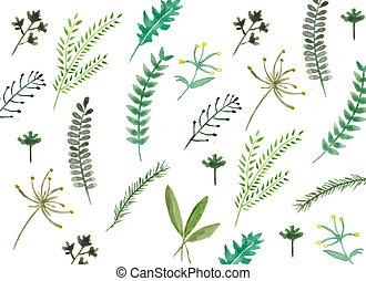 aquarela, desenhado, folhas, mão