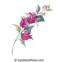 aquarela, floral, ramo