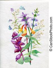 aquarela, gramas, wildflowers
