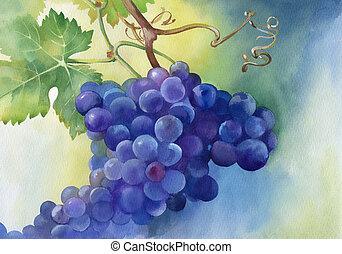 aquarela, ilustração, uvas