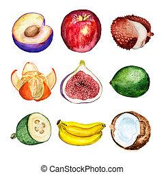 aquarela, jogo, frutas