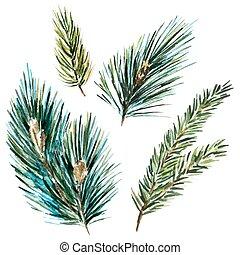 aquarela, raster, fir-tree, ramos