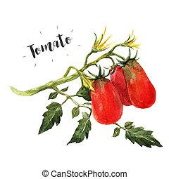 aquarela, tomate, ramo