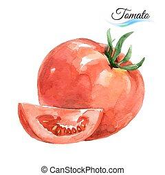 aquarela, tomate