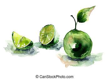 aquarell, abbildung, limonen