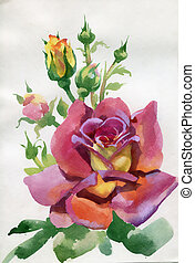 aquarell, blume, collection:, rose