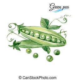 aquarell, grüne erbse