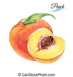 aquarell, pfirsich