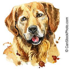aquarell, porträt, goldener apportierhund