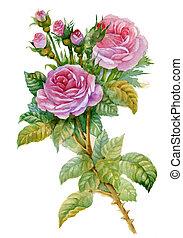 aquarell, rosen, blume, collection: