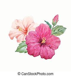 aquarell, tropische , vektor, hibiskusbl�te