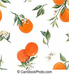 aquarelle, citrus, modèle
