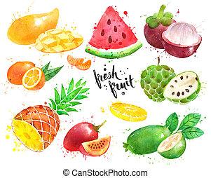 aquarelle, ensemble, fruit, illustration