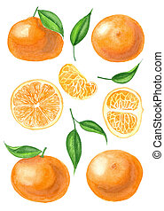 aquarelle, ensemble, mandarines