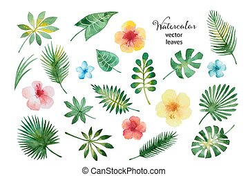 aquarelle, feuilles, ensemble, flowers.