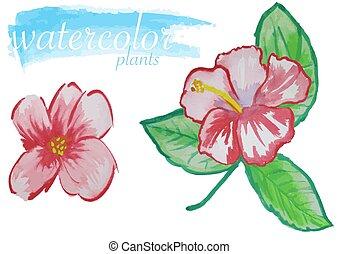 aquarelle, fleur, ensemble, rouges