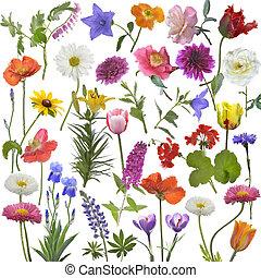 aquarelle, fleurs