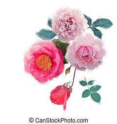 aquarelle, fleurs, rose blanche, fond