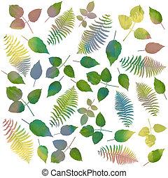 aquarelle, fond blanc, feuilles