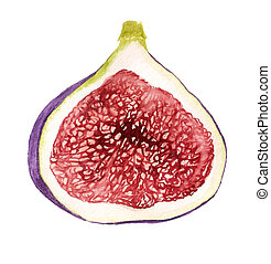 aquarelle, fruit, figue