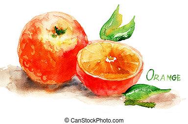 aquarelle, illustration, orange