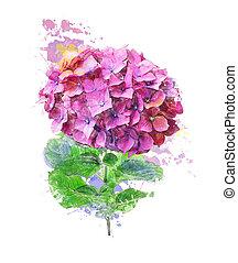 aquarelle, image, fleur, hortensia