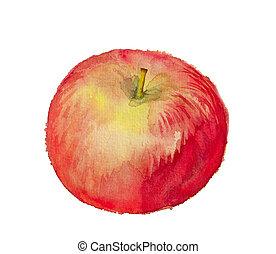 aquarelle, image, pomme, rouges