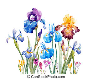 aquarelle, iris, composition