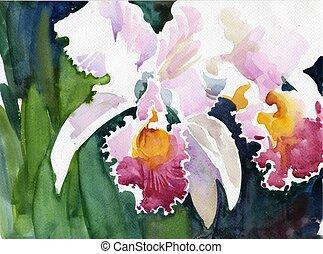 aquarelle, iris, fleur, collection: