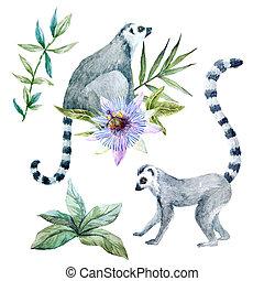 aquarelle,  Lemurs, fleurs