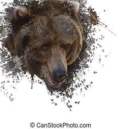 aquarelle, ours brun