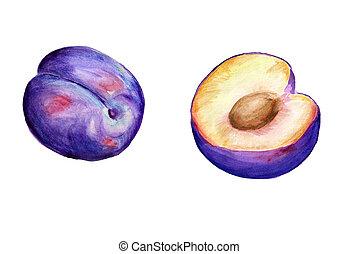 aquarelle, prunes