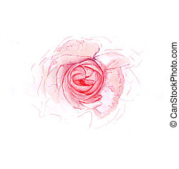 aquarelle, rose, illustration