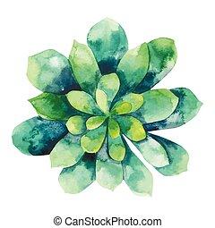 aquarelle, succulent, vert