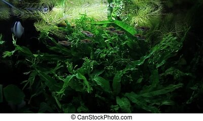 A lot of tropical fish freshwater aquarium