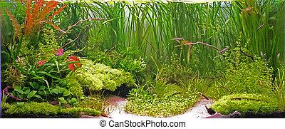 aquarium - aquarium