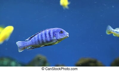 Colorful aquarium fish. Clean environment with corals and colourful fishes. Coral reef with beautiful inhabitants and plants. Different kinds of sea fish in a marine aquarium.