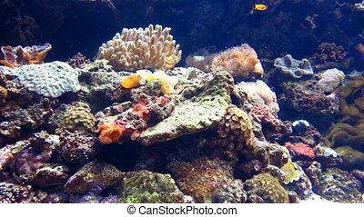 Aquarium - Detailed view of aquarium and fishes
