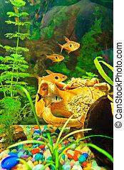 aquarium, fische, von, verschieden, arten
