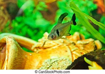 Fische verschieden aquarium arten fische species for Aquarium fische arten