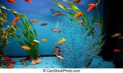 Aquarium Background Calm Fish Blue Swim Grass Video Saver Underwater