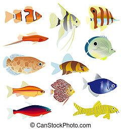 Aquarium fish - Set of aquarium fish. The illustration on a...
