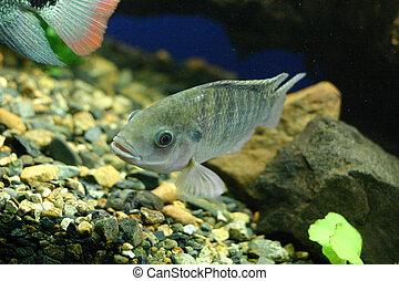 Aquarium fish - Fish underwater in a tropical setting...