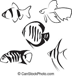 Aquarium fish. Line drawing. - Aquarium fish. Line drawing ...