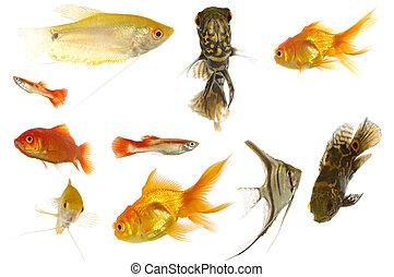 Aquarium fish on white background - Many different aquarium ...