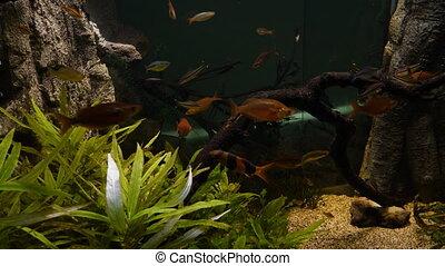 aquarium, fish, public