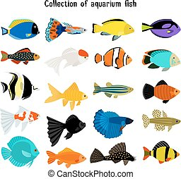 Aquarium fish set. Vector underwater diving fishes isolated on white background